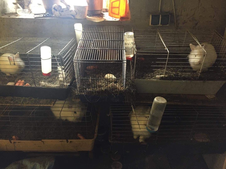 Małe klatki z królikami ustawione jedna na drugiej