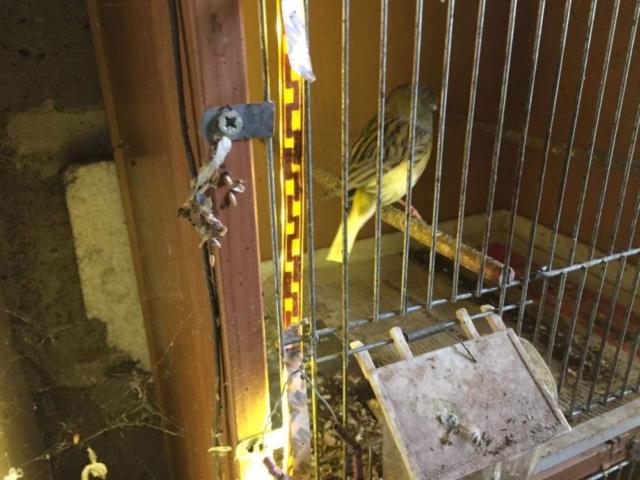 Papuga w zaniedbanej klatce