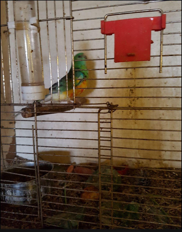 Papuga w niesprzątanej klatce